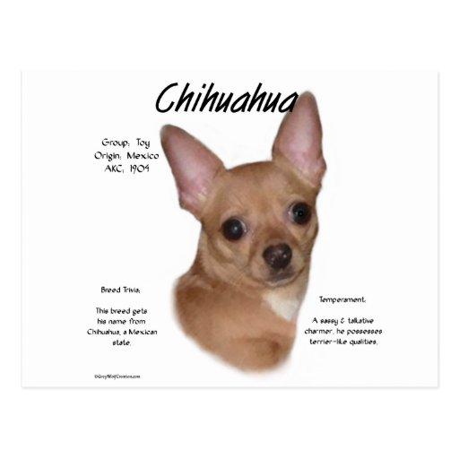Chihuahua (smooth) History Design Postcard