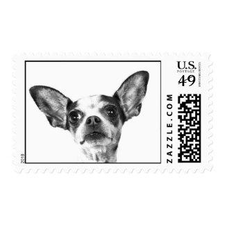 Chihuahua Stamp