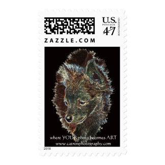 chihuahua stamp - ART
