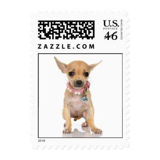 Chihuahua Stamp (MEDIUM) stamp