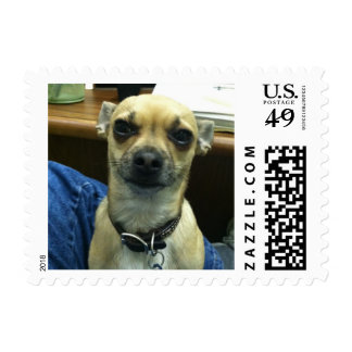 Chihuahua Stamps