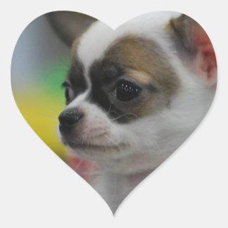 Chihuahua Star Sticker