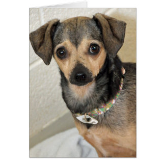 Chihuahua-Terrier Photo Greeting Cards