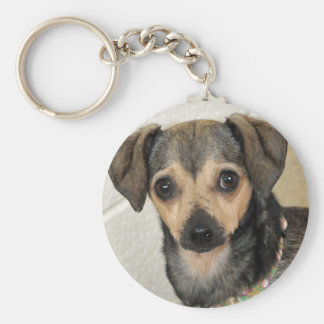 Chihuahua-Terrier Photo Keychains