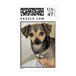 Chihuahua-Terrier Photo Postage