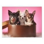 "Chihuahua Trio 4.25"" X 5.5"" Invitation Card"