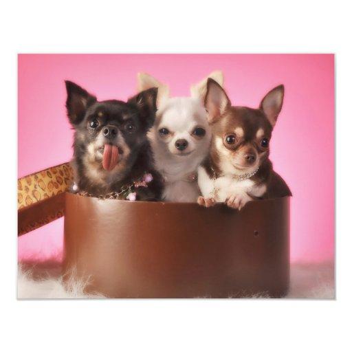 Chihuahua Trio 4.25x5.5 Paper Invitation Card