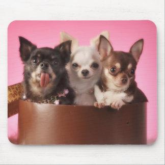 Chihuahua Trio Mouse Pad