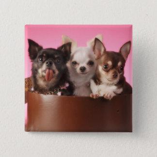 Chihuahua Trio Pinback Button