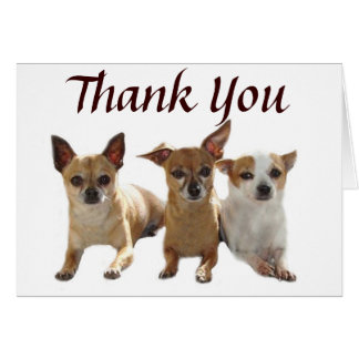 Chihuahua Trio Thank You Card