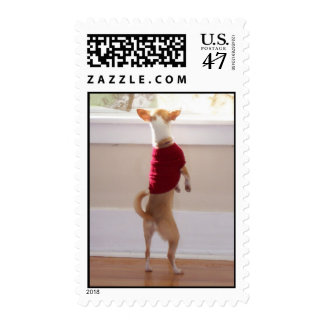 Chihuahua Waiting for You Postage ... - Customized