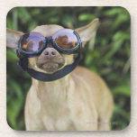 Chihuahua wearing goggles beverage coaster