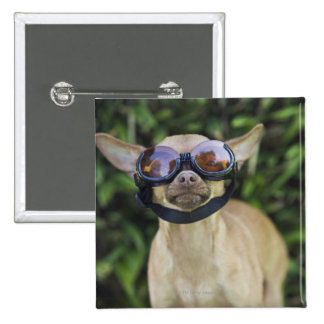 Chihuahua wearing goggles button