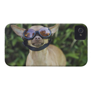 Chihuahua wearing goggles Case-Mate iPhone 4 cases