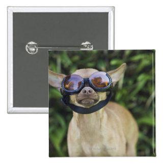 Chihuahua wearing goggles pinback button