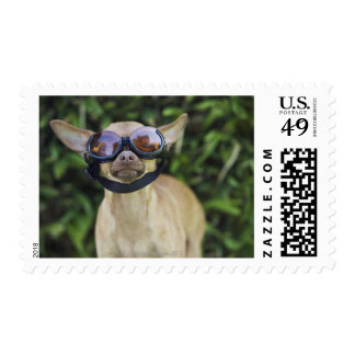 Chihuahua wearing goggles postage stamp