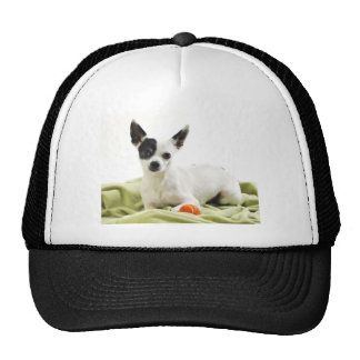 Chihuahua with ball trucker hat
