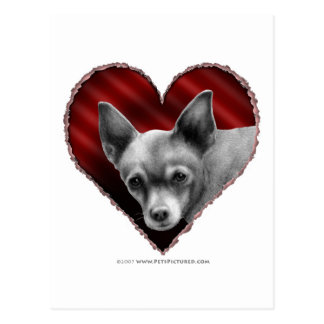 Chihuahua with Heart Postcard