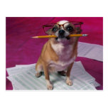 Chihuahua With Pencil Post Cards