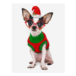Chihuahua with Santa hat and glasses Postcard