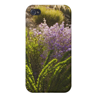 Chihuahuan desert plants in bloom iPhone 4 cover