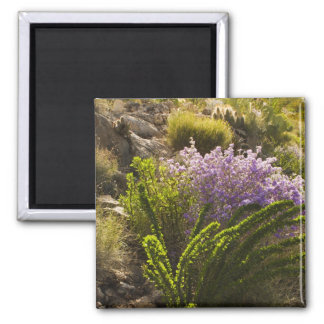 Chihuahuan desert plants in bloom magnet