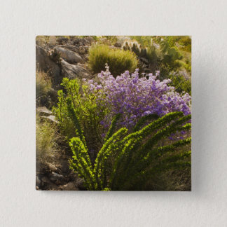 Chihuahuan desert plants in bloom pinback button