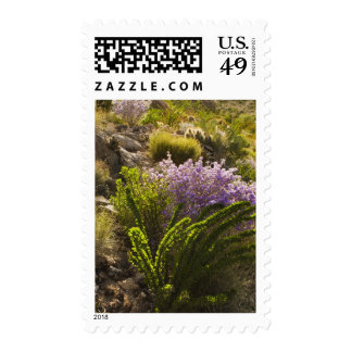 Chihuahuan desert plants in bloom postage stamp