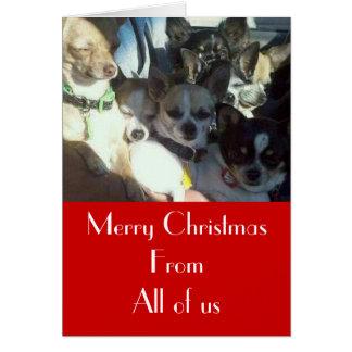 Chihuahuas Christmas Card