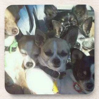 Chihuahuas Coaster Set