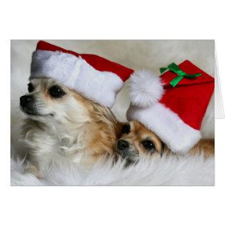 Chihuahuas de pelo largo tarjeta de felicitación