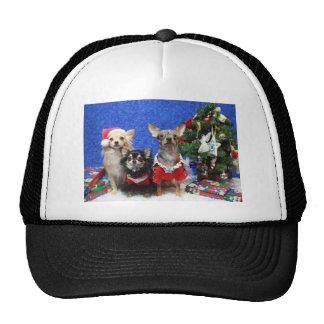 Chihuahuas del navidad gorro