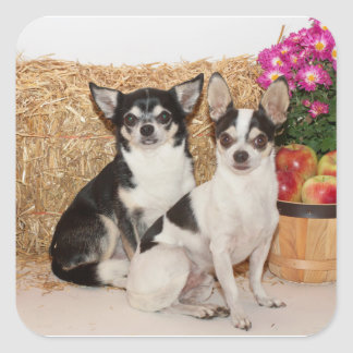 Chihuahua's in the fall square sticker