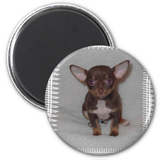 Chihuahua's Rule 1 2 Inch Round Magnet