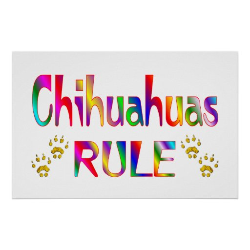 Chihuahuas Rule Poster