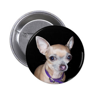 Chihuhahua Looking At You Button