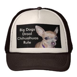 Chihuhahua que le mira gorras