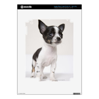 Chihuhua puppy standing on white fabric iPad 3 decals