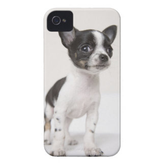 Chihuhua puppy standing on white fabric iPhone 4 case