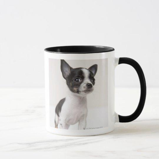 Chihuhua puppy standing on white fabric mug