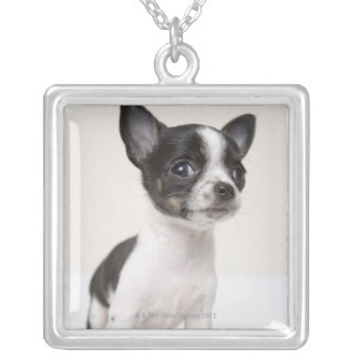 Chihuhua puppy standing on white fabric silver plated necklace