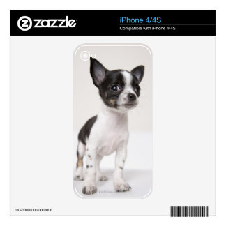 Chihuhua puppy standing on white fabric skin for the iPhone 4