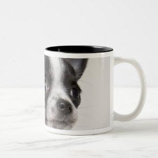 Chihuhua puppy standing on white fabric Two-Tone coffee mug