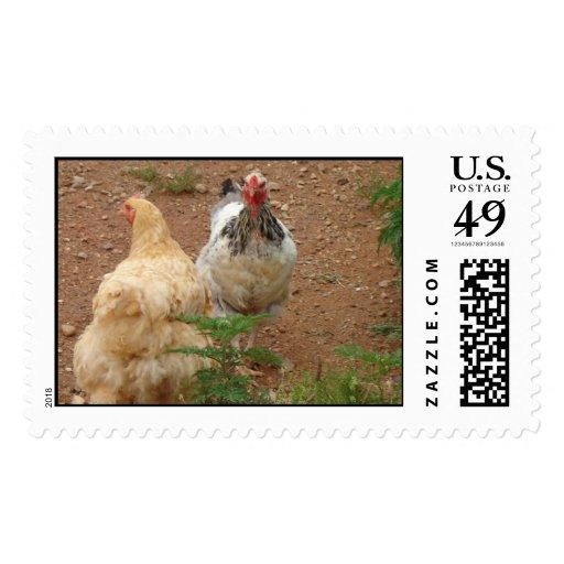 chiken postage stamps