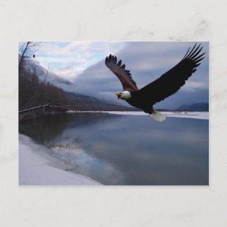 Chiklat Eagle Preserve Postcard