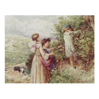Children picking blackberries, 19th century postcard