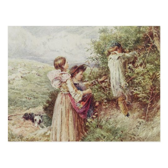 Children picking blackberries, 19th century postcard