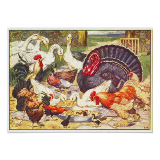 Childrens 1906 Book Illustration of Chickens, Duck Poster
