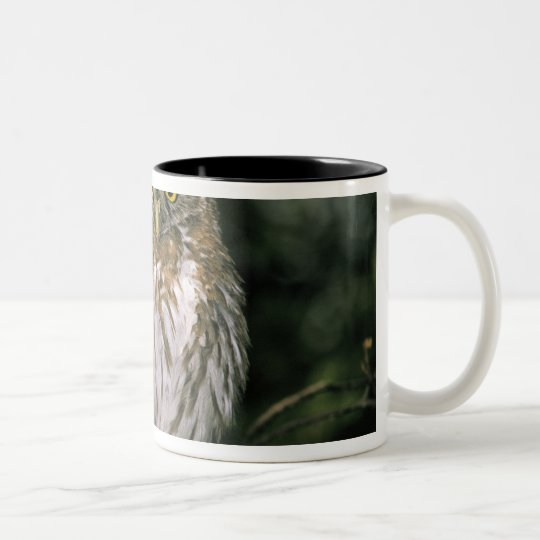 Chile, Aysen. Autral Pygmy Owl (Glaucidium Two-Tone Coffee Mug