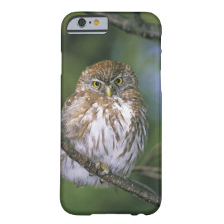 Chile, Aysen. Juvenile Autral Pygmy Owl Barely There iPhone 6 Case